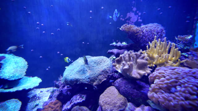 4k video footage of fish swimming in an aquarium - aquarium stock videos & royalty-free footage