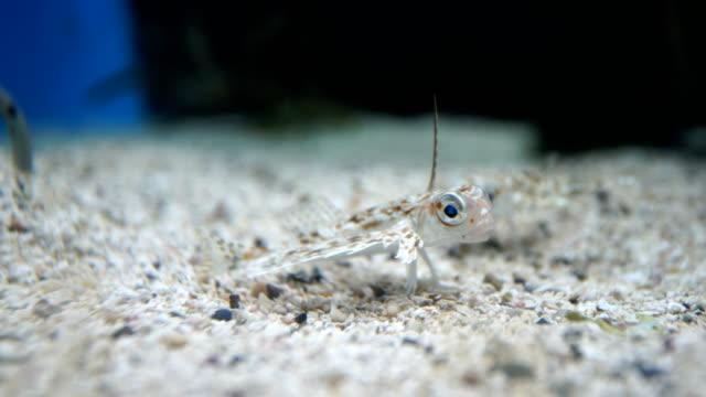 stockvideo's en b-roll-footage met 4 k-videobeelden van vis in het aquarium zwemmen - rugvin
