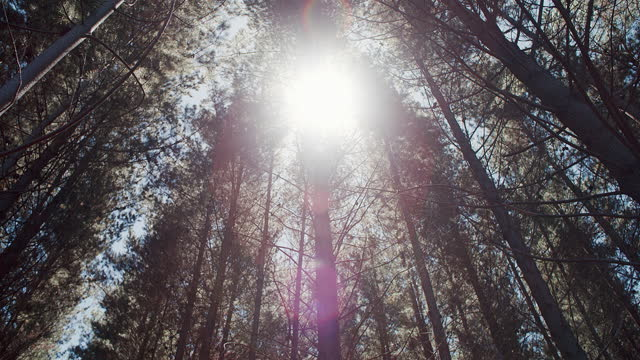 4k video footage of the sun rays  piercing through the forest tree tops - treetop stock videos & royalty-free footage