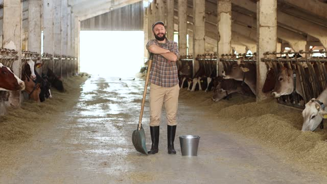 stockvideo's en b-roll-footage met 4k video moving shot of young male farm worker holding bucket and shovel  walking  in a farm cowshed - dairy product