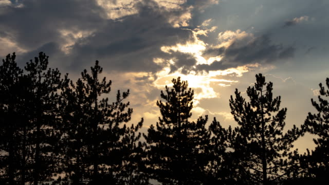 4k video of pine trees and clouds time lapse - coniferous stock videos & royalty-free footage