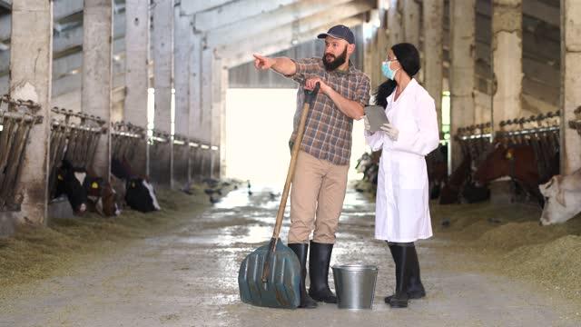 4kビデオ広い大きな牛小屋で若い男性農家と論争している白い仕事のコートを着た女性の専門家の広いショット。彼女は検査を行い、牛のケアについていくつかのアドバイスをしています - 干し草点の映像素材/bロール