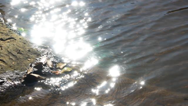 vidéos et rushes de 4 la surface de l'eau k. et le soleil reflètent. - reflet