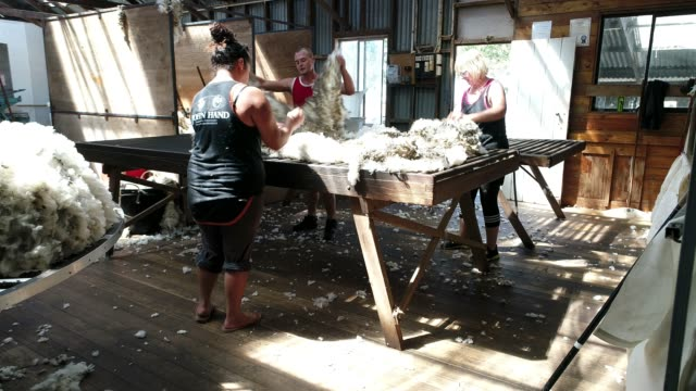 4k within woolshed where workers sort wool - sheep shearing stock videos & royalty-free footage