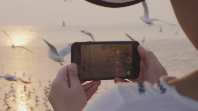 4k ,women filming seagulls flying at sunset with mobile phone - photographer stock videos & royalty-free footage