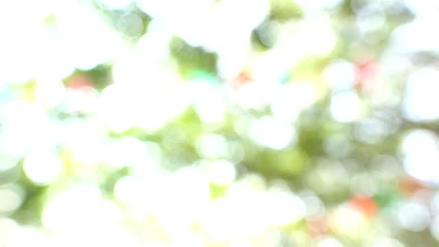 4k:bokeh av ljus passera på träd - softfokus bildbanksvideor och videomaterial från bakom kulisserna