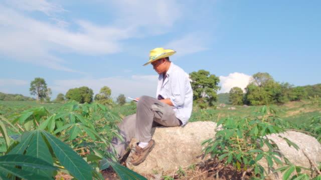4k:farmer mit einem digitalen tablet qualitätsprüfung in maniok-feld - einzelner mann über 30 stock-videos und b-roll-filmmaterial