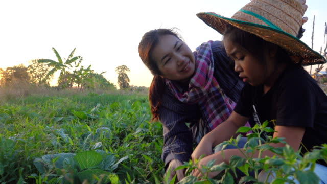 4k:mother and daughter working in vegetable garden - thailand stock videos & royalty-free footage