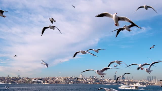 4k:seagulls from ferry, istanbul, turkey - suleymaniye mosque stock videos and b-roll footage