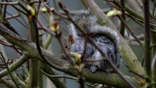 4k:squirrel - wildlife stock videos & royalty-free footage