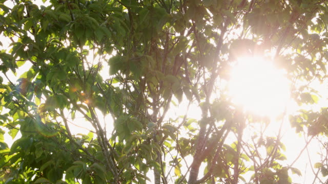 4k:sunlight seen through branches - soft focus stock videos & royalty-free footage