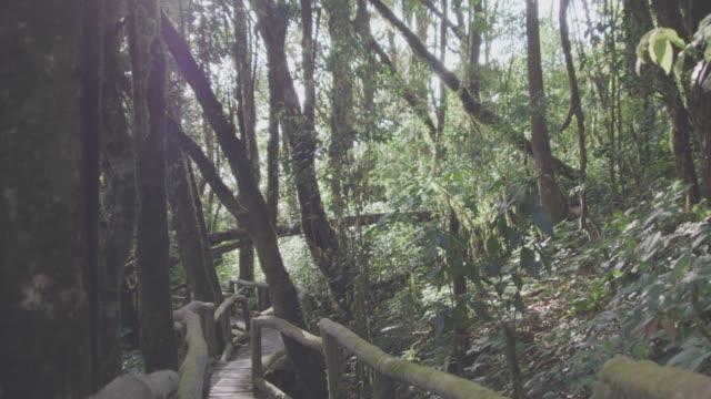 vidéos et rushes de 4k, promenade le long d'un sentier forestier - arbre tropical