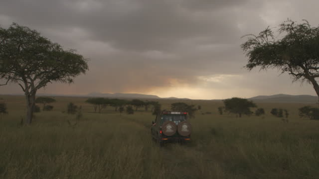 A 4x4 vehicle drives along a track running through long Serengeti grass at sunset, Tanzania.
