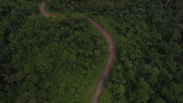 4x4s driving through rainforest dirt road