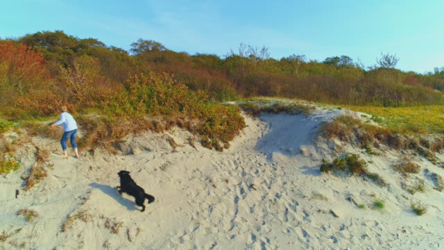 55-years-old mature active, attractive woman walking her big dog, zennenhund, on sand dunes of the baltic sea in the sunny autumn day. aerial high-angle 4k uhd video footage. - 55 59 years stock videos & royalty-free footage