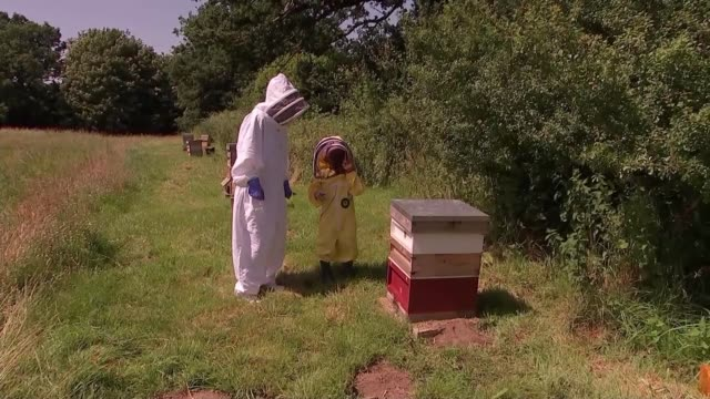 5yearold becomes uk's youngest certified beekeeper england surrey guildford ext various shots of 5yearold beekeeper archie cridland and reporter... - sticker stock videos and b-roll footage