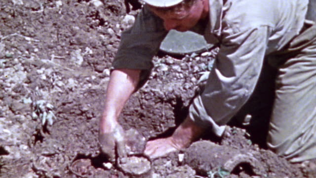 6th marine division sapper removing several tomato can mines from the ground and disarming one by removing the trigger and explosive material /... - explosive material stock videos & royalty-free footage