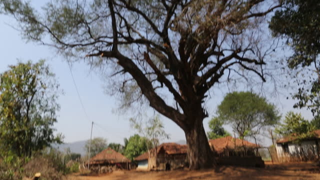 WS TD of a big tree on a dusty farm track with several shacks with tiled roofs that can be seen in the background in a rural area of the village...