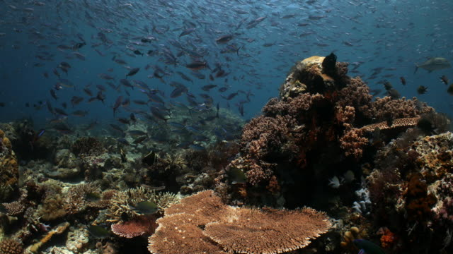a busy hard coral reef filled with fish and marine life - hard coral stock videos & royalty-free footage