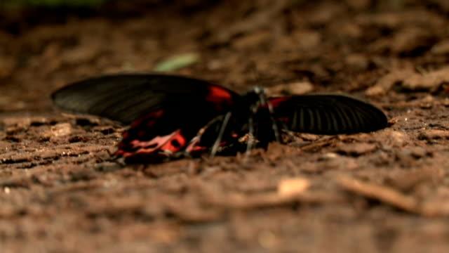 vídeos y material grabado en eventos de stock de a cu of a butterfly/ cape winelands/ western cape/ south africa - cabo winelands