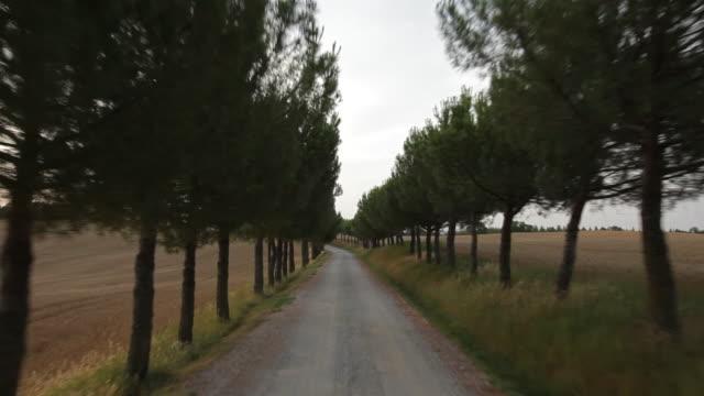 POV of a car driving down a treelined road, Tuscany, Italy