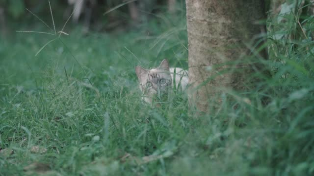 a cat focuses on attacking something. - catching stock videos & royalty-free footage