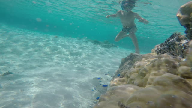 a child with a mask and snorkel under the sea with fish - huahine island stock videos and b-roll footage