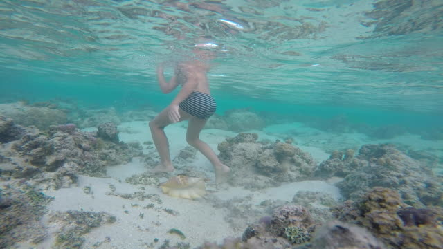 a child with mask and snorkel asus the sea with fish and a shell - huahine island stock videos and b-roll footage