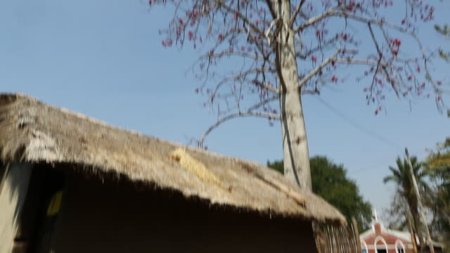 WS TD of a clay hut with a thatched roof while several goats that are visible in front of the shack in a rural area of the village Satia a small...