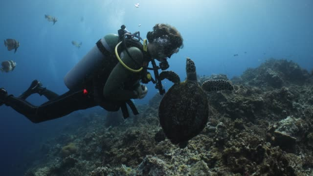 a curious sea turtle swims in to check out a scuba diver - scuba diving stock videos & royalty-free footage