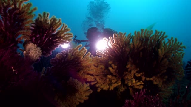 a diver swim into a garden of yellow and red seafan - aqualung diving equipment stock videos & royalty-free footage