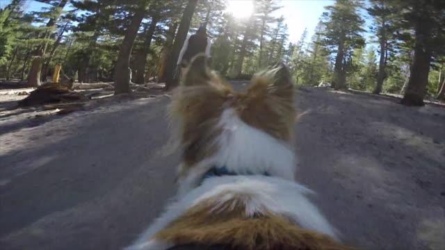 pov of a dog hiking on a trail in the mountains. - slow motion - blue dog stock videos & royalty-free footage