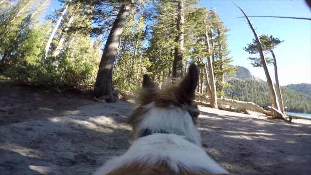 pov of a dog hiking on a trail in the mountains to a lake. - blue dog stock videos & royalty-free footage