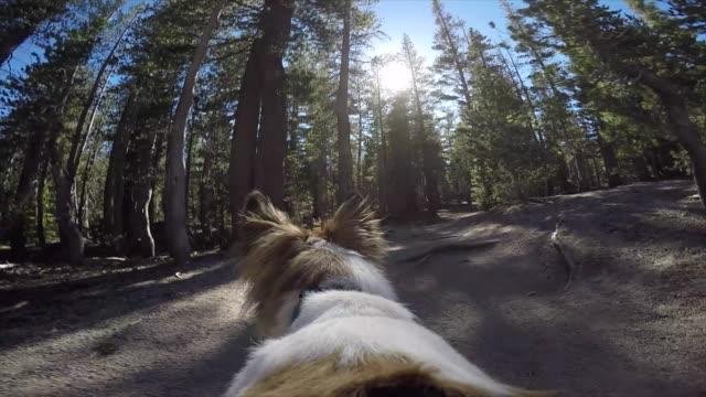 pov of a dog hiking on a trail in the mountains. - subjektive kamera ungewöhnliche ansicht stock-videos und b-roll-filmmaterial