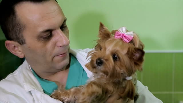 a dog that is not afraid to go to a veterinarian