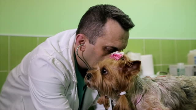 a dog with heart problems at a veterinarian on examination