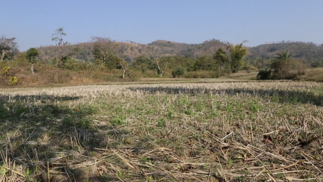 WS PAN of a dry field in a rural area of the village Satia a small settlement 300 Kilometer from Kolkata India Mountains can be seen in the background