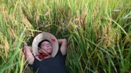 a farmer lying down on rice paddy at sekinchan agriculture field enjoying his harvest
