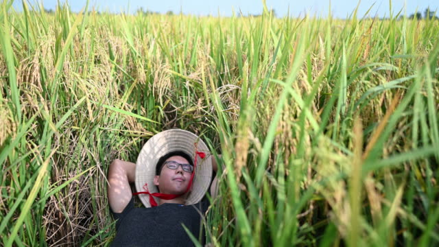 vídeos de stock e filmes b-roll de a farmer lying down on rice paddy at sekinchan agriculture field enjoying his harvest - braço humano