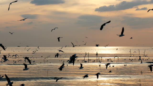 a flock of seagulls in the sky at sunset - seagull stock videos & royalty-free footage