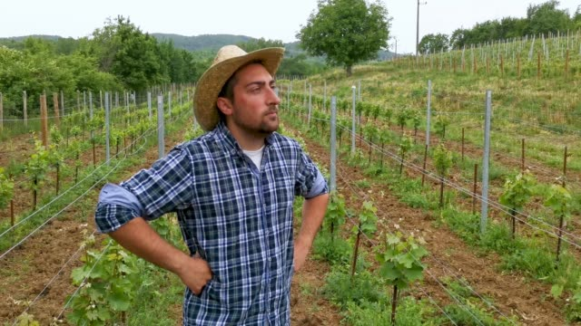 vídeos de stock e filmes b-roll de a grape grower inspects the newly planted vines - chapéu