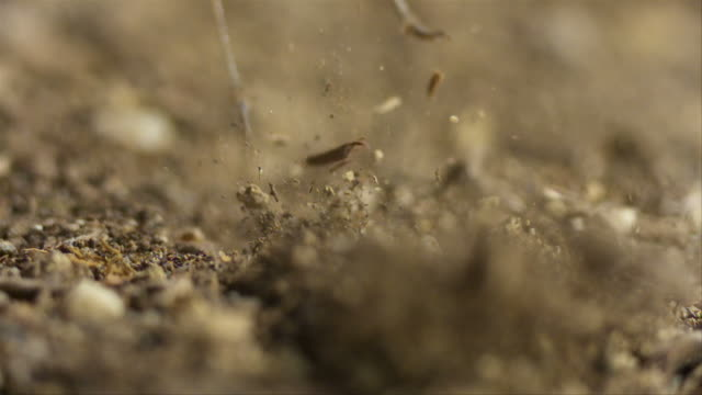 slo mo of a grasshopper jumping and kicking dirt up into the air (4000 frames per second) - 昆虫点の映像素材/bロール
