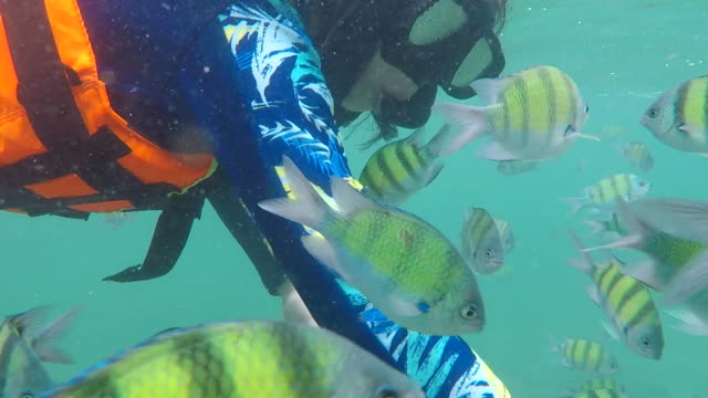 a group fish comes close to unrecognizable woman feeding it