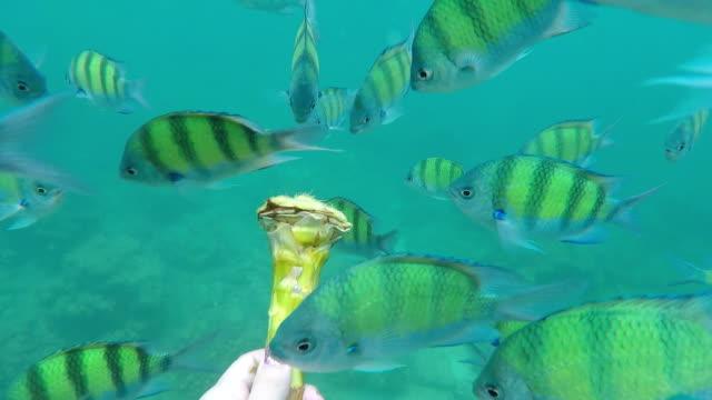 en grupp fisk utfodring