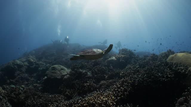 a hawksbill turtle swimming up towards a group of scuba divers - vattenlandskap bildbanksvideor och videomaterial från bakom kulisserna