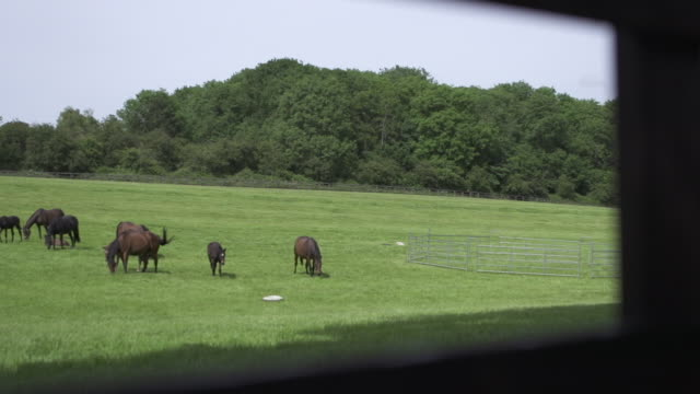 vídeos y material grabado en eventos de stock de ws of a herd of horses. - animales de trabajo