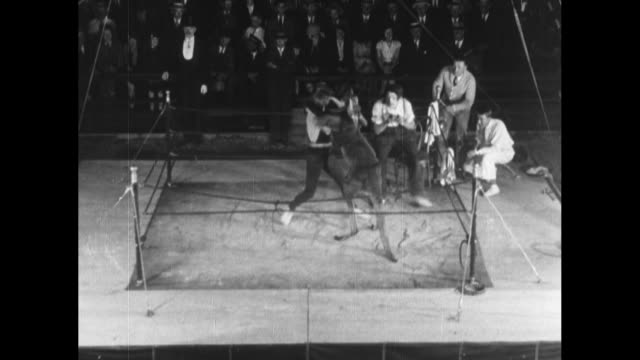 a kangaroo vigorously spars with a human opponent; the handlers and referee all fall out of the ring / note: exact month/day not known - känguru bildbanksvideor och videomaterial från bakom kulisserna