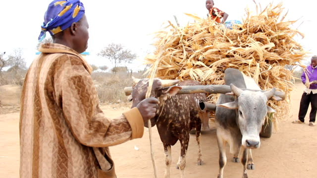 stockvideo's en b-roll-footage met a man and a woman standing next to it and young man on top of it cattle cart full of straw on august 01 2011 in dadaab kenya - vluchteling ontheemden