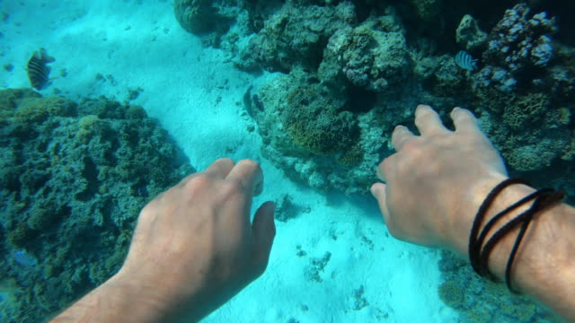 pov of a man snorkeling at a tropical island resort. - underwater diving stock videos & royalty-free footage