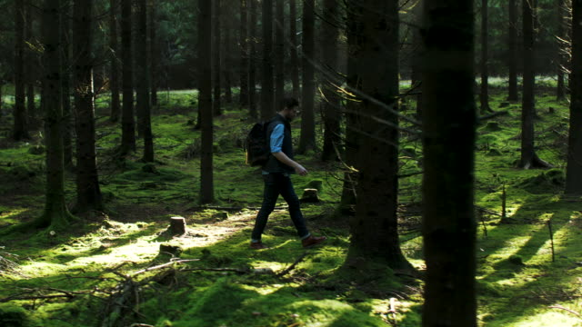 a man walking in the forest - grass stock videos & royalty-free footage